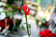 Aimer les sens des Fleurs Montpellier Fleuriste propose de l'Ikebana au magasin de fleurs de Port Marianne (® SAAM-fabrice Chort)