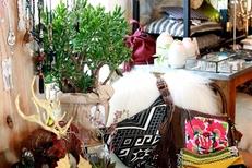 Chuma Montpellier vend des plantes grasses et une sélection d'objets déco en centre-ville aux Arceaux (® networld-fabrice Chort)