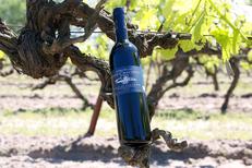 Domaine du Petit Chaumont Aigues Mortes présente l'une de ses cuvées de Vin Rouge (® SAAM- Fabrice Chort)