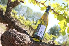 Domaine du Petit Chaumont et une cuvée de vin blanc bio produite à Aigues Mortes (® SAAM- Fabrice Chort)