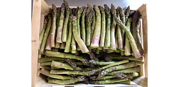 Pourthié and Co annonce l'arrivée des premières asperges dans sa boutique de produits régionaux de Candillargues.