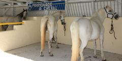 Loisirs Montpellier par exemple randonnée à cheval (® networld-Fabrice Chort)