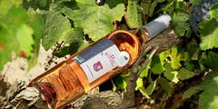 Vin Montpellier ici le vin rosé du Domaine du Petit Chaumont producteur de Vins de Sable Bio dans la commune d'Aigues Mortes (® NetWorld – Fabrice Chort)